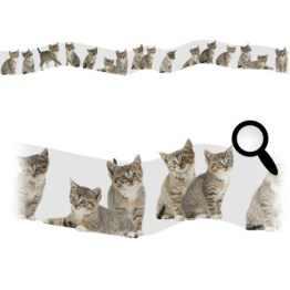 http://www.wallsweethome.fr/fr/stickers-enfant/stickers-frises/chats/