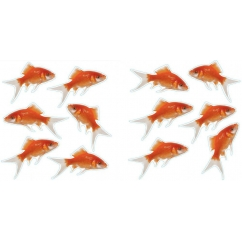 http://www.wallsweethome.fr/fr/stickers-deco/mini-stickers/mini-poissons-rouge/