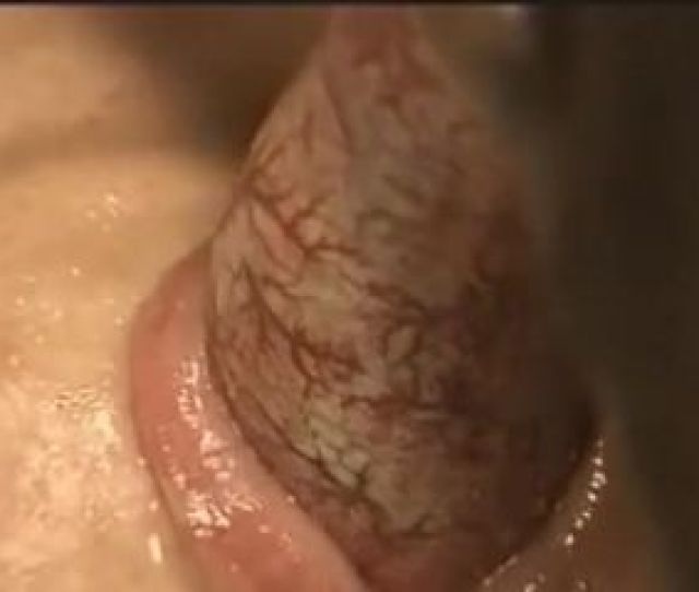 Whore Gets Some Dog Semen  C2 B7 Dirty Bitch Sucked Dogs Cock For Good And Got Her Mouth Jizzed