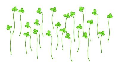 ブロッコリースプラウトの栽培はカビや臭いに注意!?栽培方法と種の購入先は?