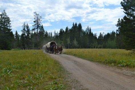The wagons moving down the trail on Teton Wagon Train & Horse Adventure's four day wagon train vacation.