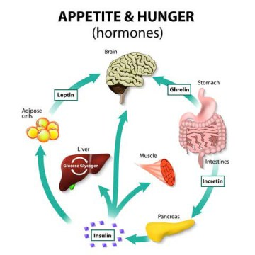 Tetrogen  Image of visual hunger