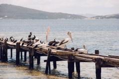 Australia_deLUX-1982