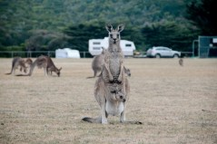 Australia_deLUX-5879