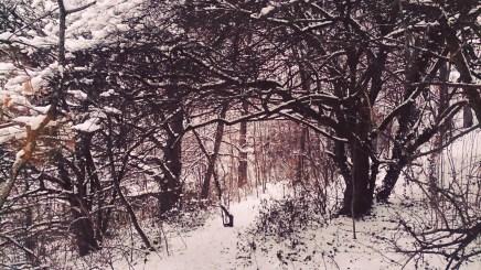 Winter hedge fairy tales...