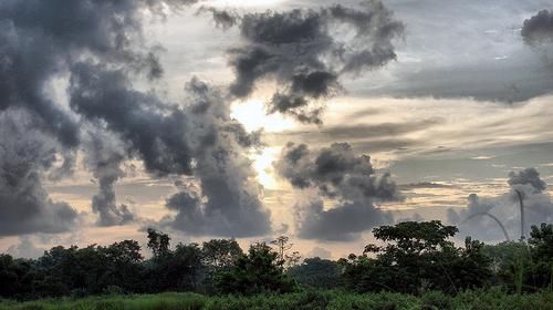 A Rain Harvest on the way