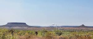 Texas wind farm vista