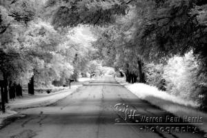 Infrared Tree Canopy