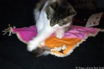 Texas a Cat in New York; Texas; Kitshka; birthday
