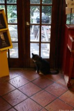 Park Slope Community Bookstore | Texas, a cat in... Austin