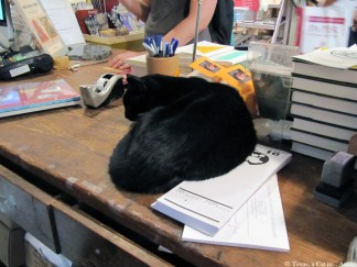 Spoonbill & Sugartown, Booksellers | Texas, a cat in... Austin