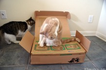 Litter One Review | Texas, a cat in... Austin