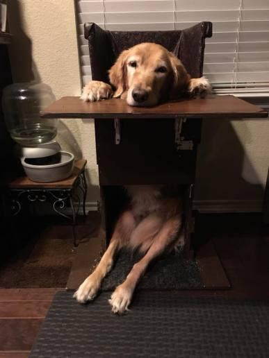 Texas Pet Company Avery Jane MegaEsophagus Bailey Chair 2