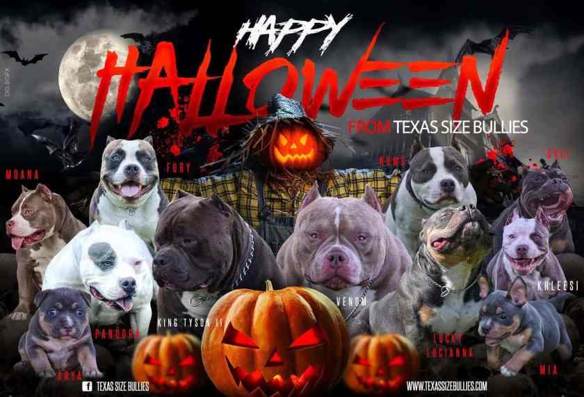 Happy Halloween | Top American Bully Breeders in Florida | Venomline