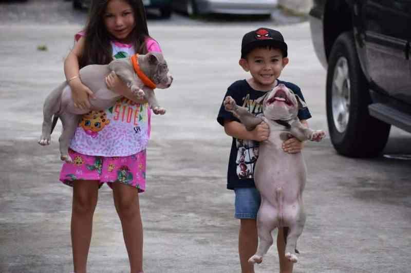 , About, Venomline | Texas Size Bullies