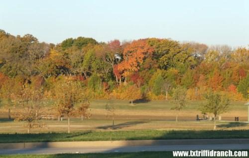 Texas-style autumn color