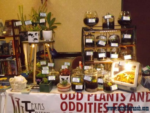 Triffid Ranch display