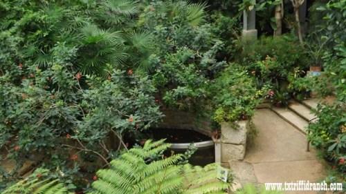 Texas Discovery Gardens Butterfly Garden