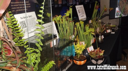 Carnivorous plant selection at the Perot Museum