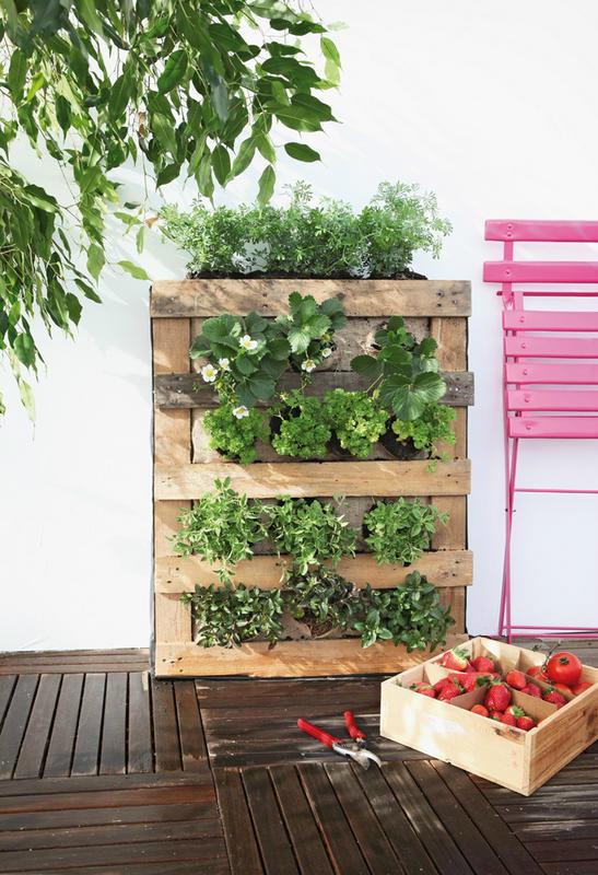Πώς να διακοσμήσετε την κουζίνα σας με βότανα5