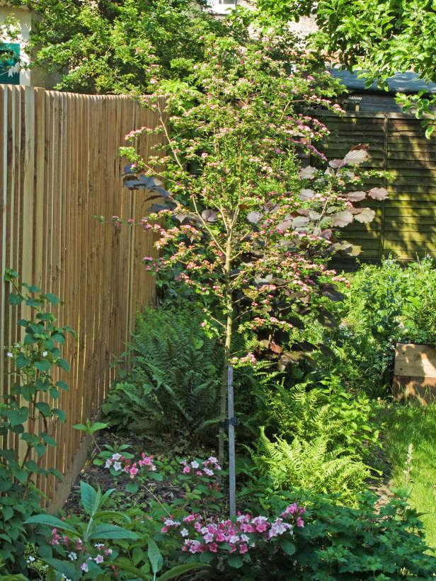 Είδη για φράχτες Κήπου10