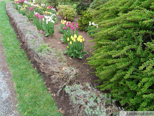 Ιδέες Σχεδιασμoύ κήπου με Τουλίπες8