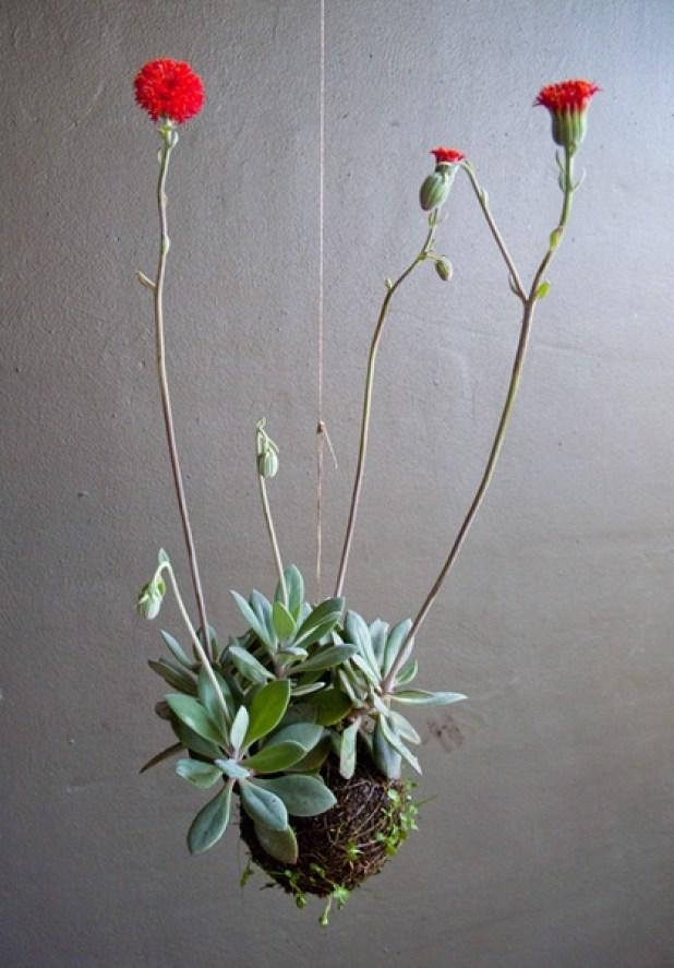 Ιδέες Εσωτερικής διακόσμησης με φυτά18