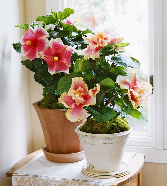 Ιδέες Εσωτερικής διακόσμησης με φυτά6