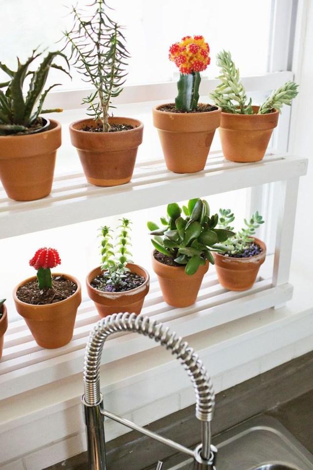 DIY Ιδέες Βότανο κήπων Παραθύρων για την κουζίνα σας12