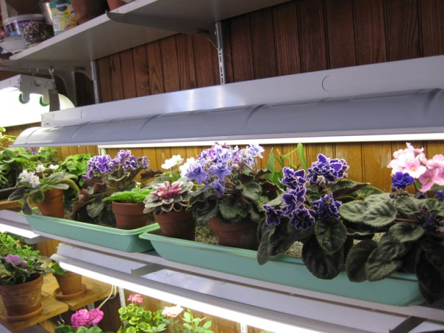 DIY Ιδέες Βότανο κήπων Παραθύρων για την κουζίνα σας14