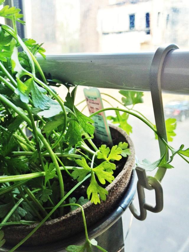 DIY Ιδέες Βότανο κήπων Παραθύρων για την κουζίνα σας3