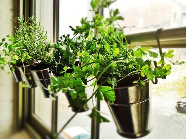 DIY Ιδέες Βότανο κήπων Παραθύρων για την κουζίνα σας4