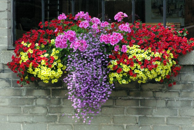 Ιδέες με ζαρτινιέρες λουλουδιών για τα παράθυρα σας8