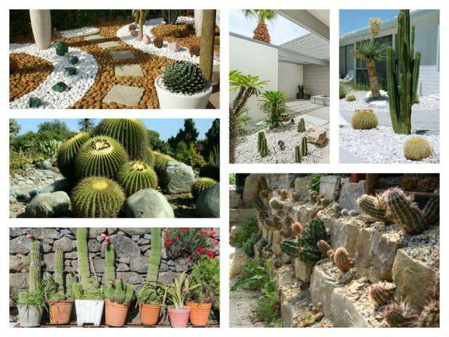 Κήποι με κάκτους