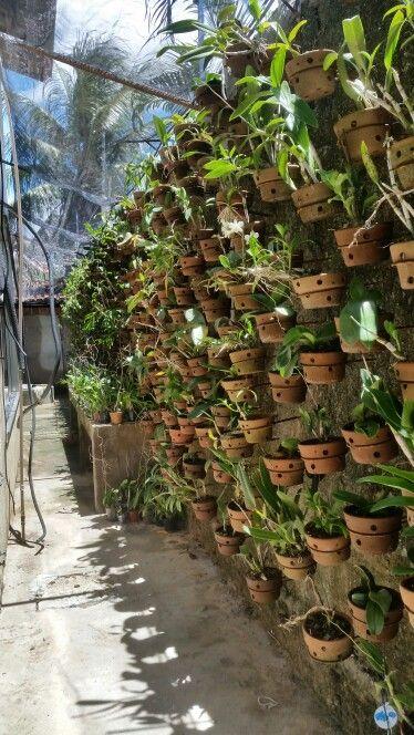 θεραπευτική γωνιά με φυτά1