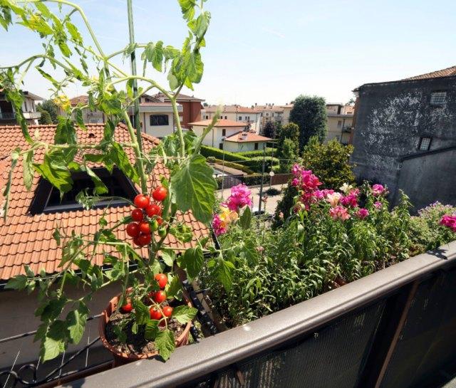 Ιδέες με Φανταστικούς λαχανόκηπους15