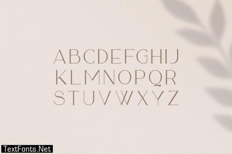Sequoia Typeface Font