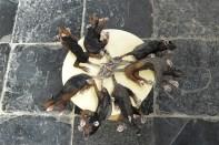 De rattenkoning