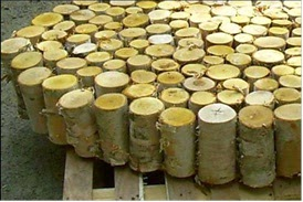 Raw Materials for lyocell Fiber