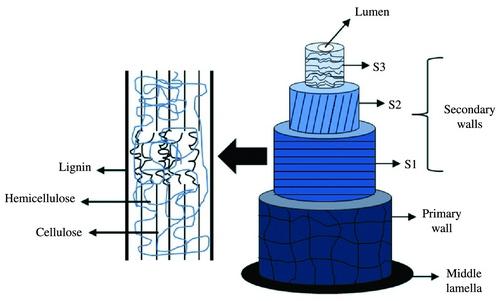 cotton fiber structure