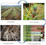 Application of Pineapple Leaf Fibre in Automotive Industry