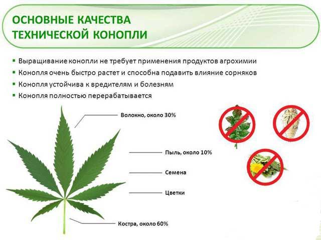 1 га можно собрать конопли легализация марихуаны кто за