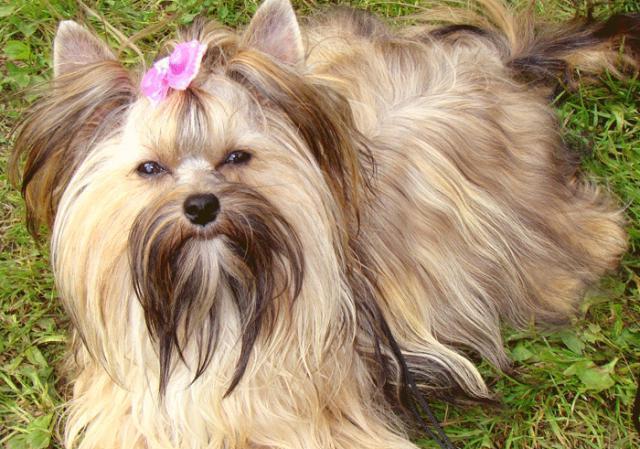 Новые породы собак: описание
