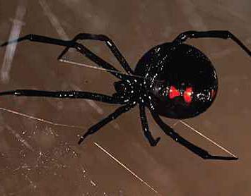 Почему нельзя убивать паука в доме? Народные приметы