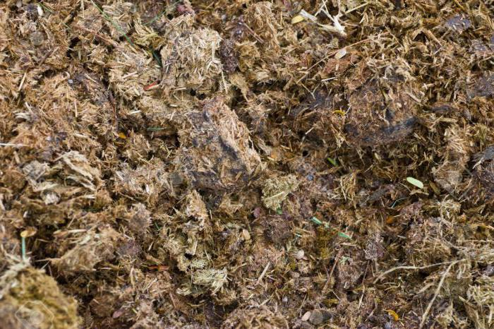 Как сделать травяной настой для подкормки растений?
