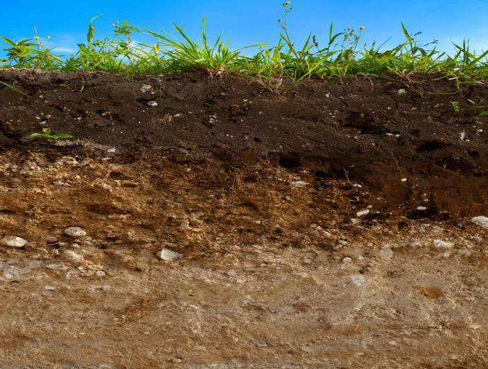 В чем заключаются основные свойства почвы?