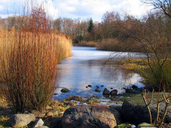 Что такое биотоп в экологии?