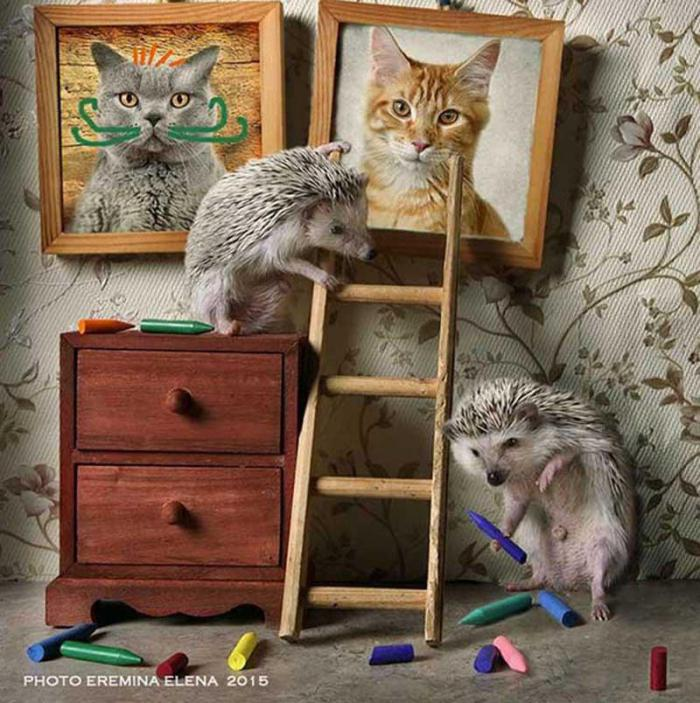 Тайная жизнь ежиков: очаровательный фотопроект петербурженки
