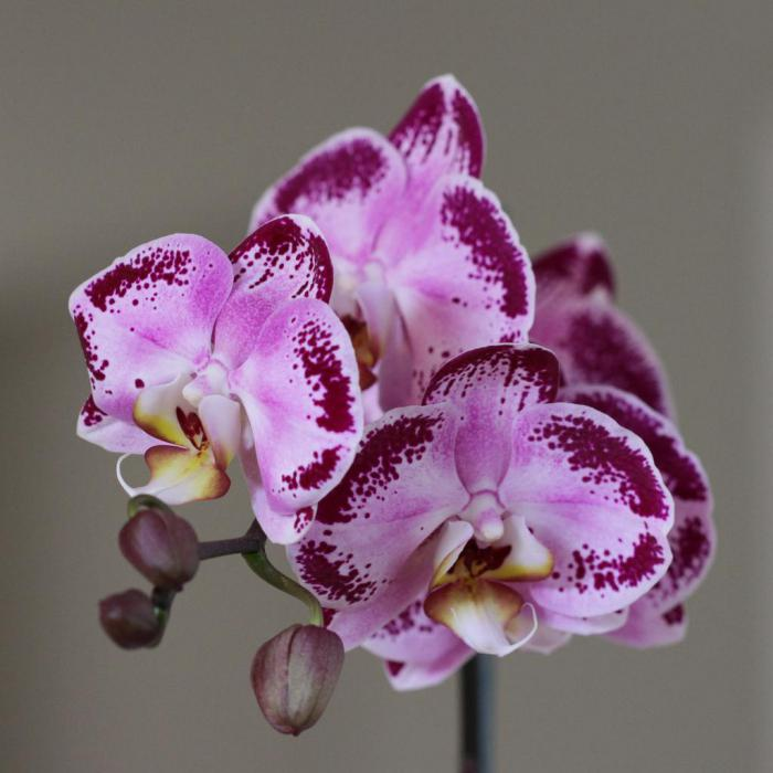 7 самых выносливых комнатных растений
