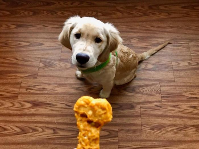 Тестировщик жвачки и еды для собак, а также другие оригинальные вакансии в пищевой индустрии